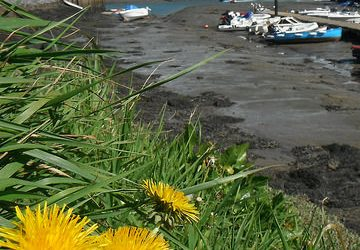 Volunteers needed for Salcombe Beach Clean!